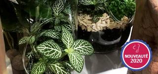 Jardin d'intérieur : le terrarium | Muriel Bouquin